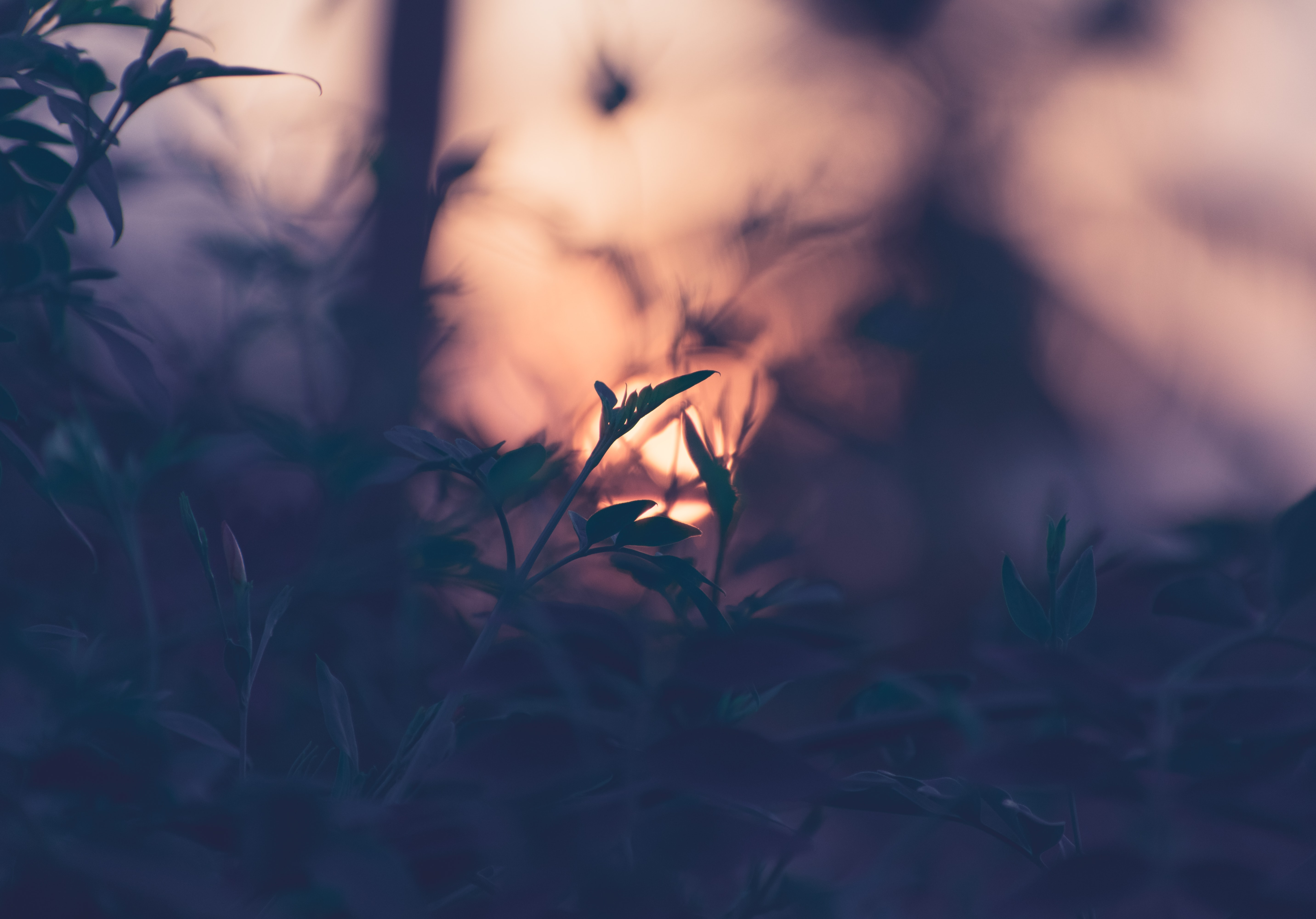 Image of a sunset through grass