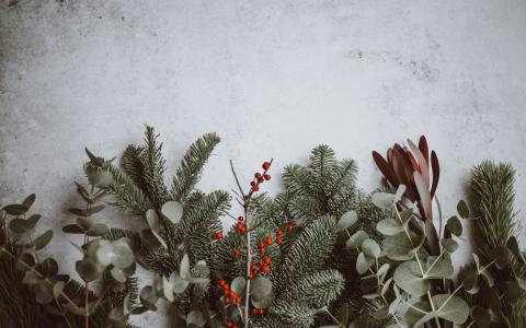Image of winter evergreens