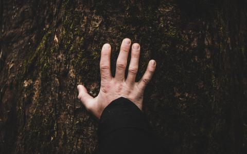 Image of a hand on a tree trunk
