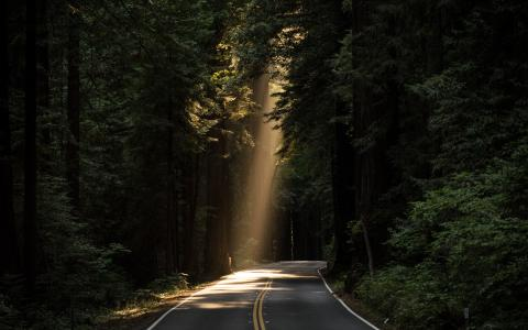 Image of a shaft of light falling on a road between trees